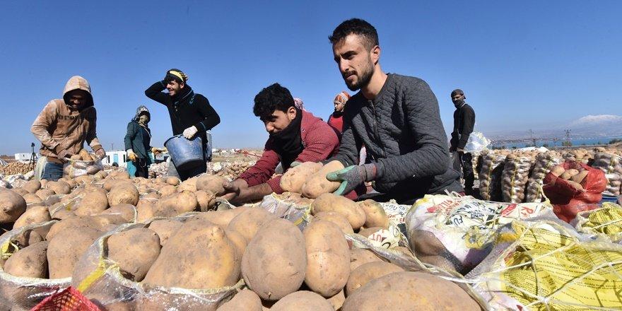 Bitlis'te 200 bin ton patates, dış pazar arıyor
