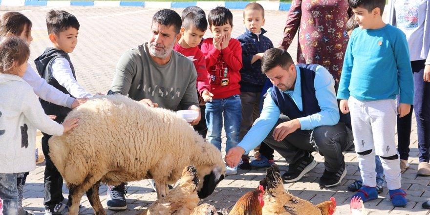 VİDEO - Minikler, okullarında toprağı işleyip hayvan besliyor