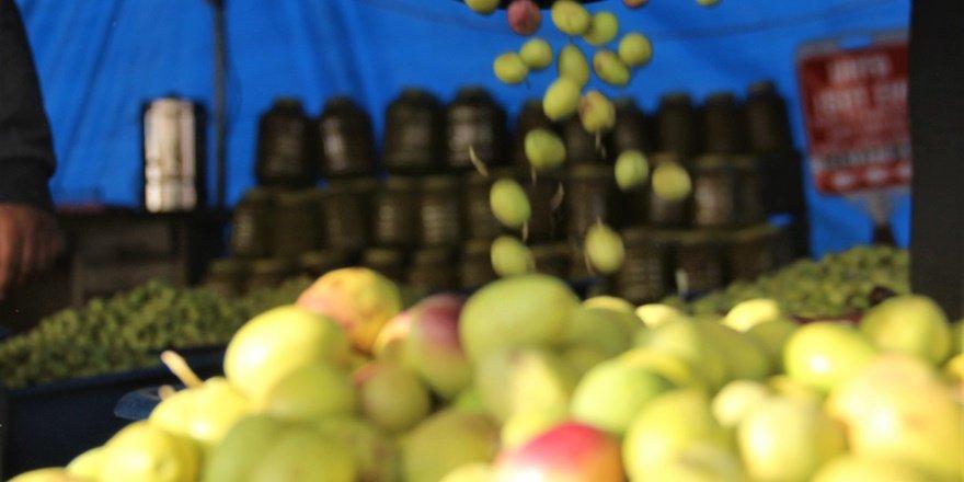 Şanlıurfa'da zeytin hasadı sürüyor