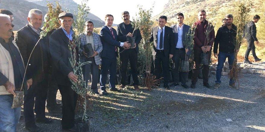 Hazro'da çiftçilere meyve fidanı dağıtımı
