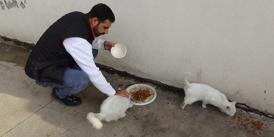 Diyarbakır'daki hayvansever 30 Van kedisi ile başa çıkamıyor