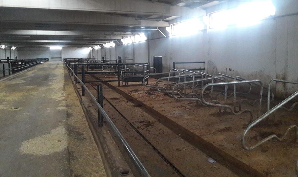 VİDEO - Bir çiftlik Bank Vakası da Diyarbakır'da yaşandı