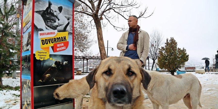 Tuncelili hayvanseverden sokak hayvanları için mamamatik