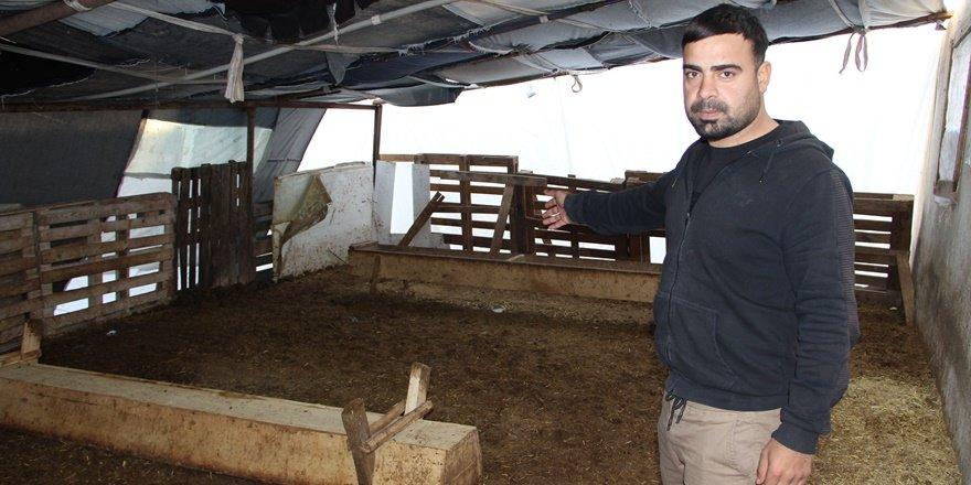 Diyarbakır'da koyun hırsızlığı