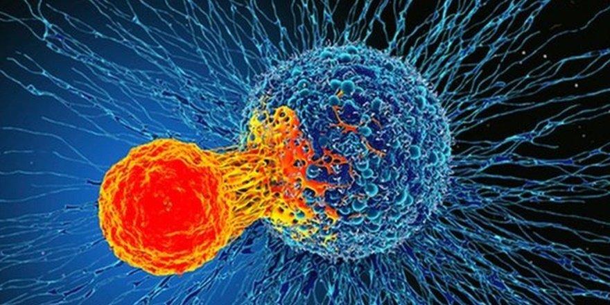 T hücresi kanserli hücrelerle mücadele edebiliyor
