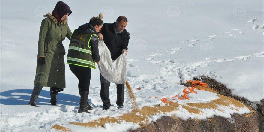 Şırnak'ta yaban hayvanları unutulmadı