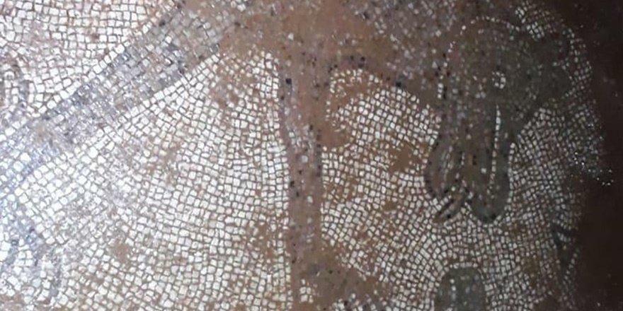 Şanlıurfa'da Roma dönemine ait mozaikler ortaya çıktı