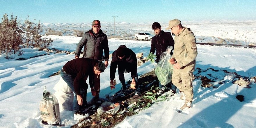 Mardin'de avcılar yaban hayvanlarını yemledi