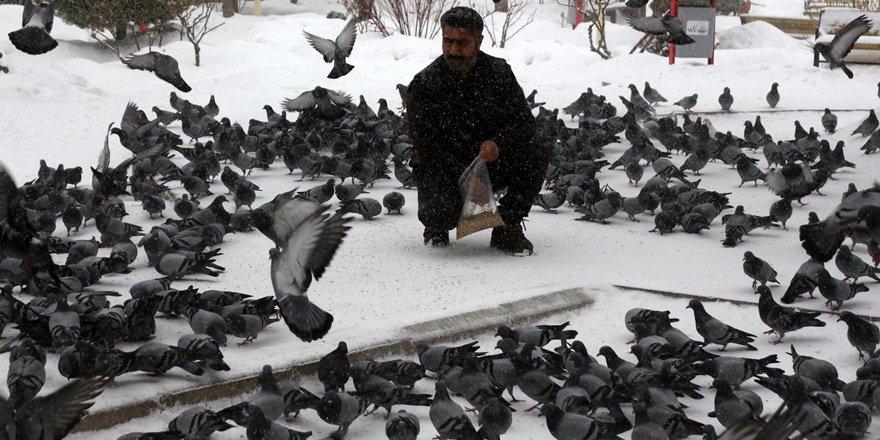 Kuşların yem mücadelesi görsel şölene dönüştü