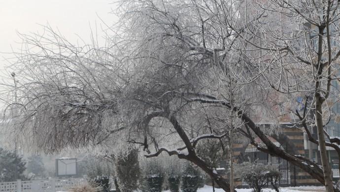 Diyarbakır'da ağaçlar buz tuttu
