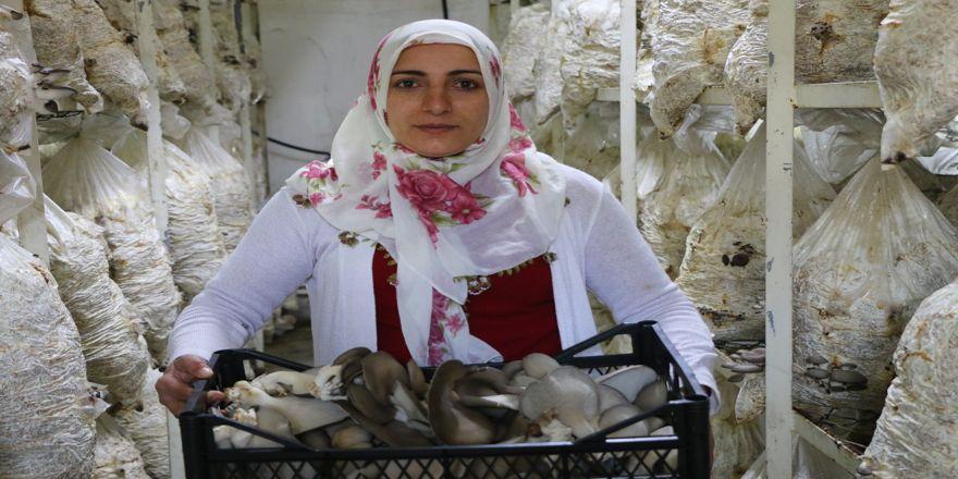 12 kadınla birlikte 6 aydır mantar üretiyor