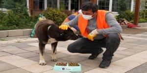 Büyükşehir Belediyesi sokak hayvanlarını unutmadı