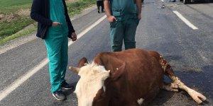 Diyarbakır'da otomobil yol ortasındaki 2 ineğe çarptı