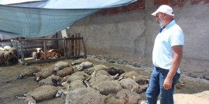 Kurtlar mahalleye indi, 22 koyunu telef etti