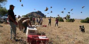 Bin adet keklik doğaya salındı, avcılara 3 yıl yasak geldi