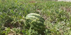 Kent içi tarımın ilk ürünleri ihtiyaç sahiplerine