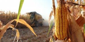 Diyarbakır'da mısır rekoltesinde beklenti yüksek