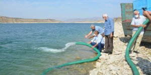 350 bin sazan yavrusu baraja bırakıldı