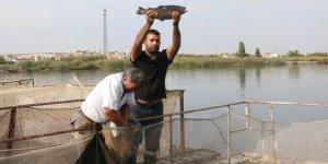 Karadeniz'in balığı Güneydoğu'dan