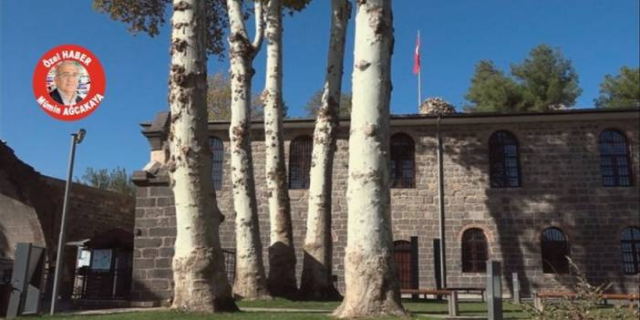 VİDEO - Bu ağaçlar konuşsa, herkes susar