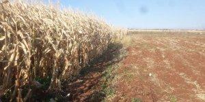 Urfa'da mısır tarlasındaki yangında bir çocuk öldü