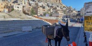 Mardin'in 'kadrolu eşekleri' kısıtlamalarda da mesaiye yapıyor