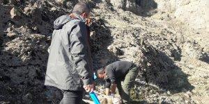 Dersim'de nesli tehlike altında olan 8 yaban keçisi ölü bulundu