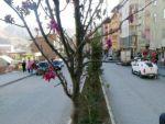 Hakkari'de meyve ağacı çiçek açtı