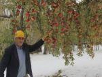 Elmalar dalında kar altında kaldı