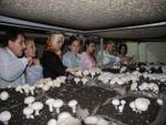TUNCELİ'DE 'MANTARLAR KADIN ELİYLE GÜZELLEŞİYOR' PROJESİ