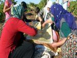 Siverek'te üzüm toplama ve bulamaç sezonu başladı