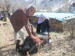 Şırnak'ın Beytüşşebap ilçesinde köye inen kurt sürüsü, 35 keçiyi telef etti