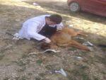Yaralı sokak köpeği tedavi altına alındı