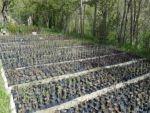 Bingöl'de fidan üretimi pazar arıyor