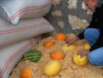 Çemişgezeklilerin samanlıkta sakladıkları lezzet