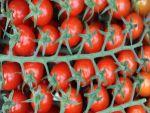 """""""Rusya'nın Türkiye'ye domates yasağı ile ilgili çözüm bulunacak"""""""