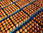 Bakan Fakıbaba'dan 'zehirli yumurta' açıklaması