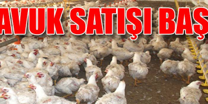 Organik tavuk satışı başlıyor!