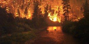 Orman yangınları faili meçhul