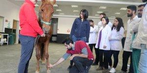 Öğrencilere uygulamalı veterinerlik eğitimi