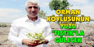 "ORMAN KÖYLÜSÜNÜN YÜZÜ ""FISTIK""LA GÜLECEK"
