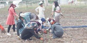 Modern yöntemlerle sebze yetiştiriciliği