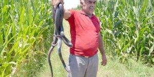Hava sıcaklıkları yılanları şehir merkezine çekiyor