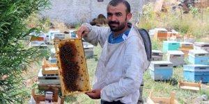 Arıları Telef Olan Arıcıya 40 Kovan Arı Desteği