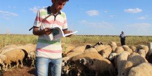 Çobanlık yaparken üniversiteye hazırlanan Musa diş hekimliğini kazandı