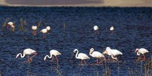Van'da göz kamaştıran Flamingo festivali