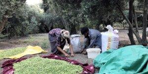 Derikli zeytinciler: En büyük sorunumuz su