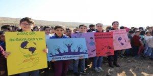 Mardin'de öğrenciler 2 bin fidan dikti