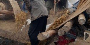 Şanlıurfa'da ahır çöktü: 2 inek telef oldu