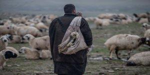 Çobanların zorlu kış mesaisi